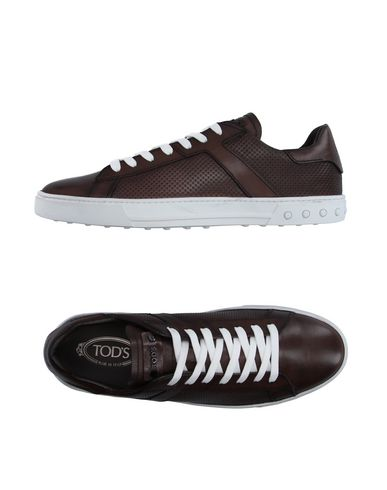 Tod's Sneakers In Cocoa