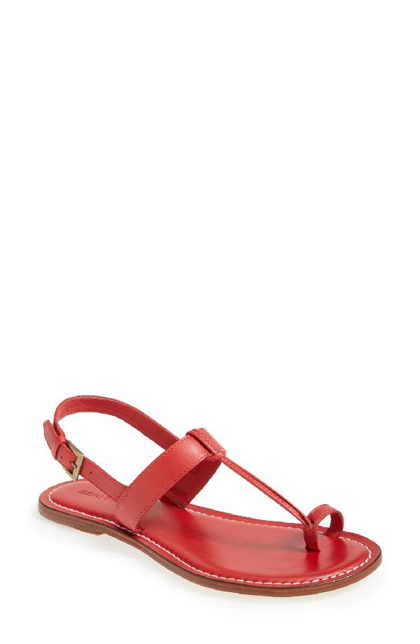 Bernardo Maverick Toe-strap Flat Sandals In Red Calf