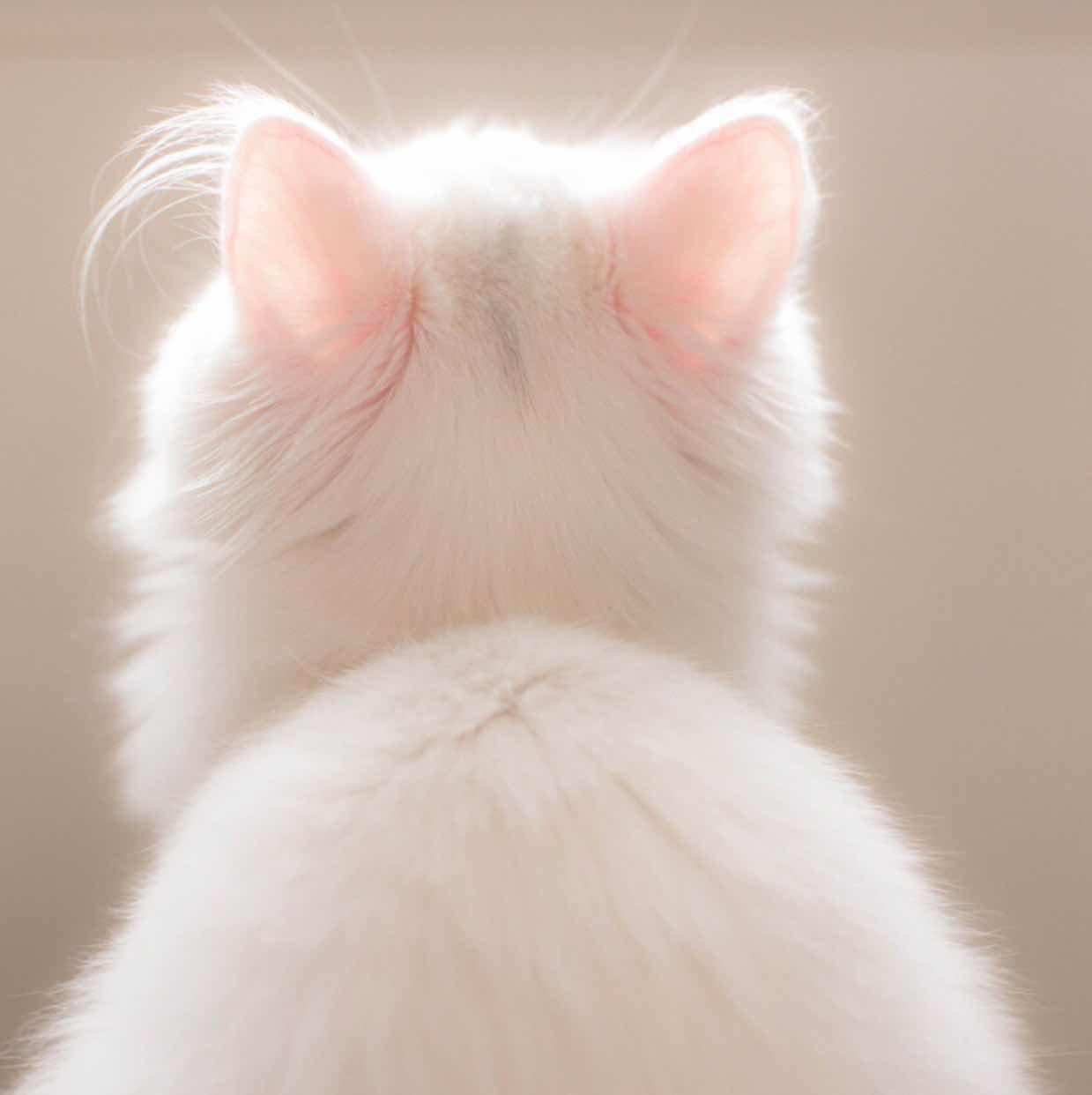dl.meow