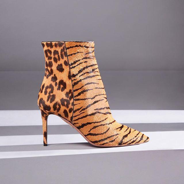 b05069fccd96 Aquazzura Alma 85 Booties In Tiger/Caramel Leopard | ModeSens